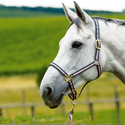 Equicare Fine Equestrian Products :Latest Products :Leather lined nylon headcollar with matching American lead rope